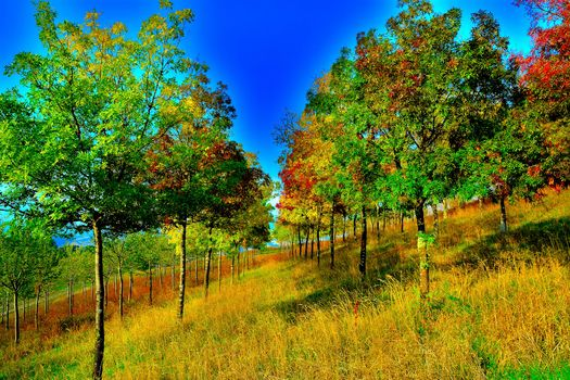 autumn, Hill, slope, trees, landscape