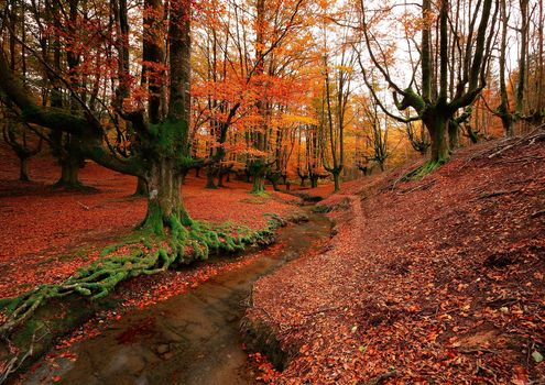 Otzarreta, Bizkaia, Spain, forest, small river, trees, autumn, landscape