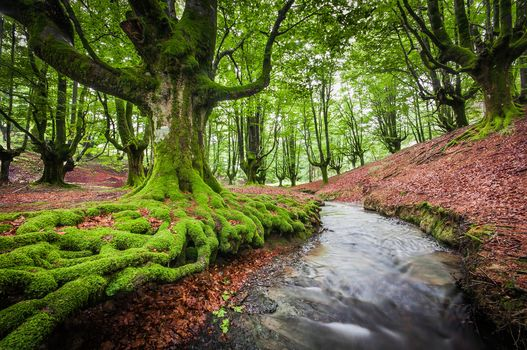 Otzarreta, Bizkaia, Spain, forest, small river, trees, landscape