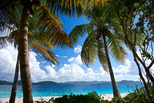 sea, Coast, palm trees, beach, landscape