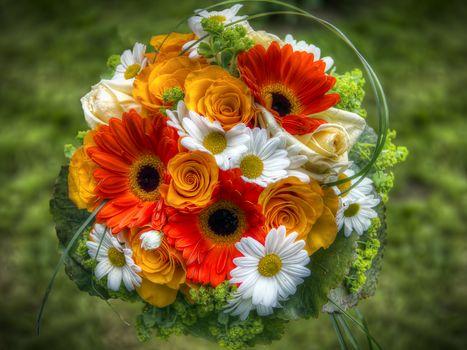 gerberы, chrysanthemum, roses, flowers, flora