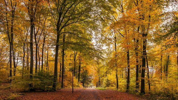 autumn, forest, park, trees, road, landscape