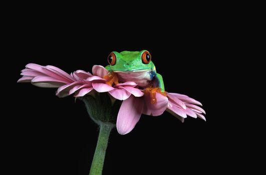 frog, Zemnovodnыe, creeping things