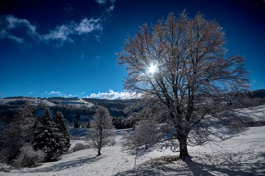 winter, snow, the mountains, hills, trees, landscape