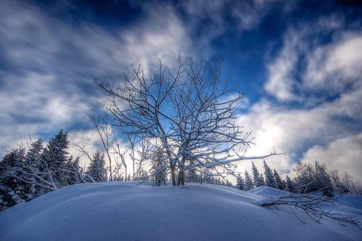 winter, snow, snowdrifts, Hill, trees, landscape