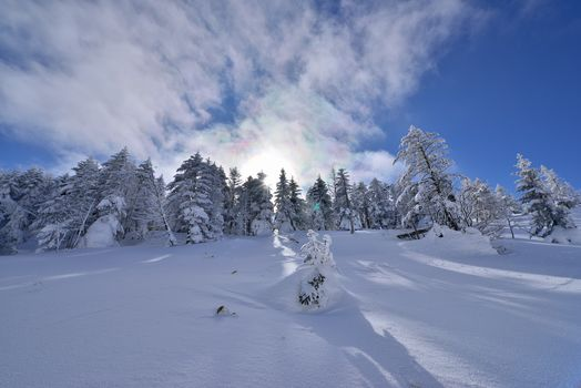 winter, snow, snowdrifts, trees, landscape