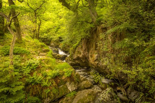 forest, trees, small river, rock, landscape