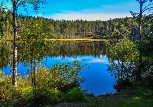 lake, forest, trees, landscape