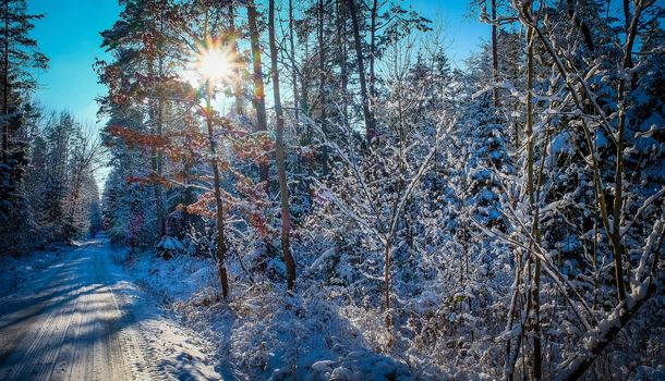 winter, forest, trees, road, landscape