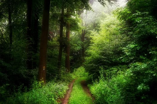 forest, trees, road, fog, nature