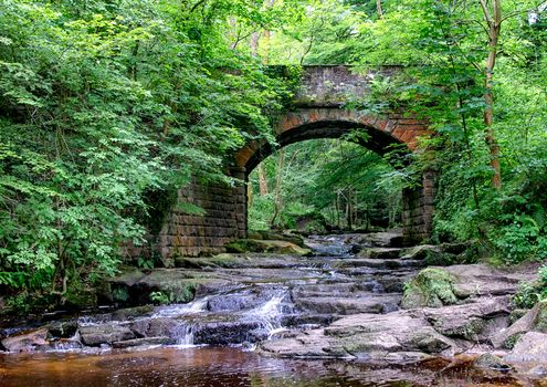 forest, trees, small river, Creek, bridge, landscape