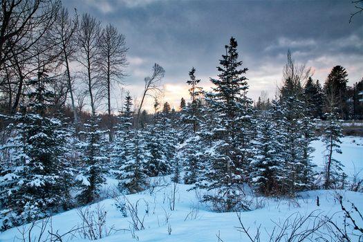 winter, sunset, trees, Calgary, Canada