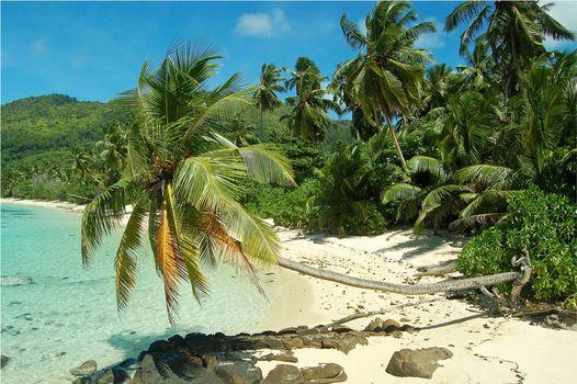 sea, palm trees, Coast, beach, Seychelles, landscape