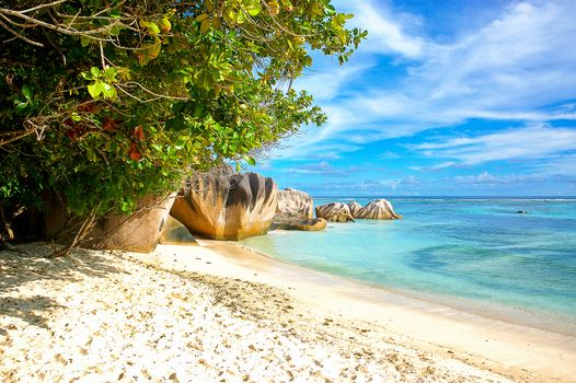 sea, beach, Coast, trees, landscape, Seychelles