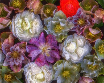 roses, background, flowers, flora