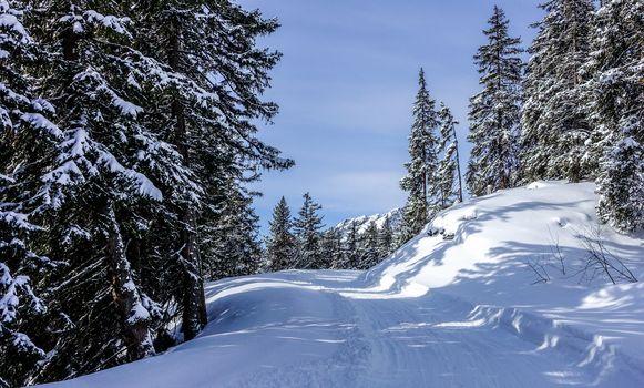 winter, snow, road, trees, landscape