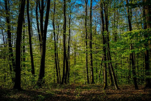 forest, trees, nature