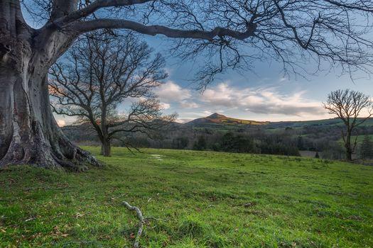 fields, hills, sunset, trees, landscape