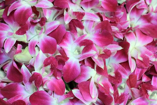 flowers, orchid, pink orchid, texture, flowers texture