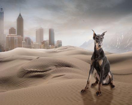 sands, hlmy, city, dog, Doberman