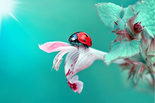 flower, ladybug, macro, flora, insects