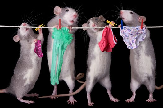 rats, linen, rope, humor