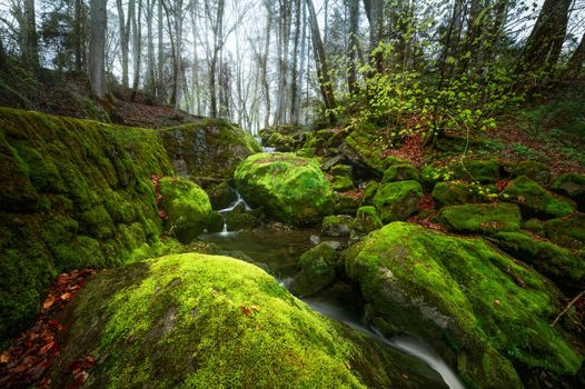 forest, trees, small river, Creek, rock, stones, moss, landscape