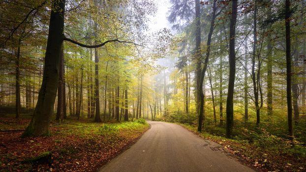 autumn, Zumikon, Switzerland, road, trees, landscape