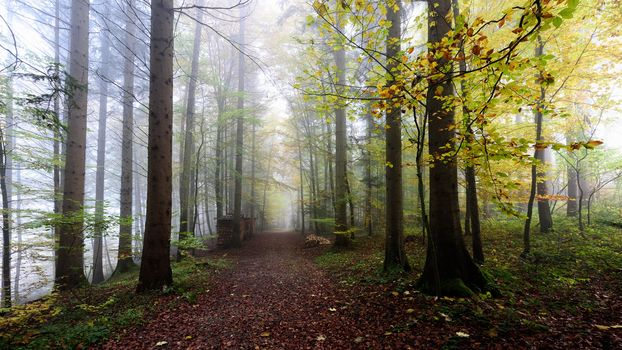 autumn, forest, trees, road, fog
