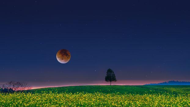 field, night, moon, tree, landscape
