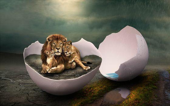 rain, egg, lions