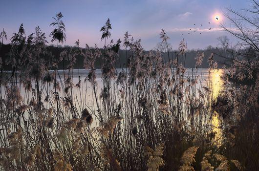 sunset, lake, grass, sky, birds, landscape