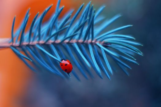 ladybug, insects, plant, branch, Pine, macro