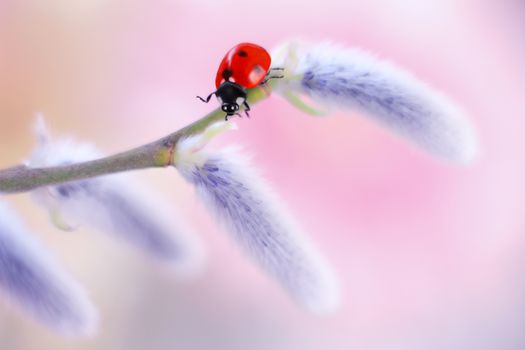 ladybug, insects, plant, branch, macro
