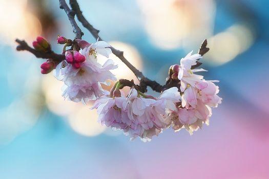 Деревья цветущие