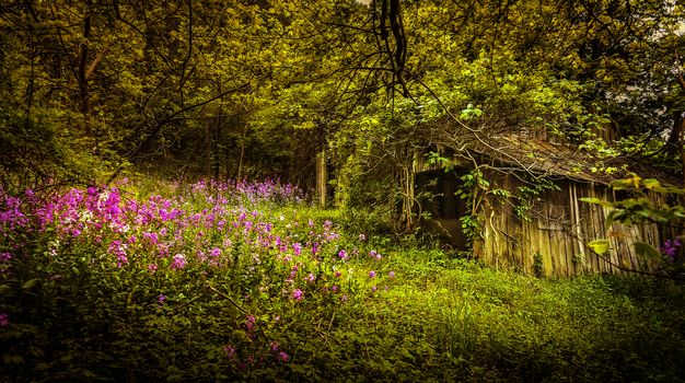 forest, trees, flowers, lodge, ruin, barn, landscape