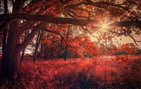 autumn, the sun, rays, trees, landscape