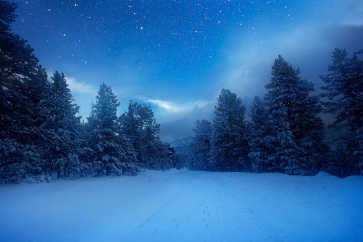 winter, forest, snow, trees, landscape
