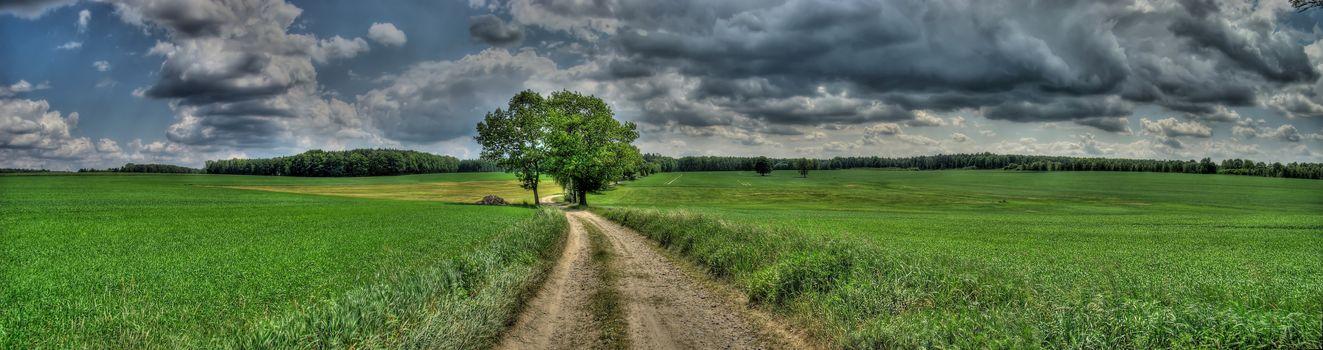 Дорога в Масснеи-Форест, Саксония, Германия, поле, дерево, пейзаж, вид