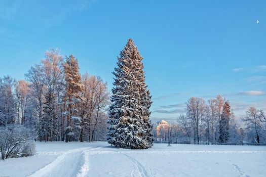 St. Petersburg, Pavlovsk park, Russian Winter