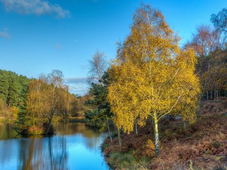 autumn, water, lake, forest, trees, landscape