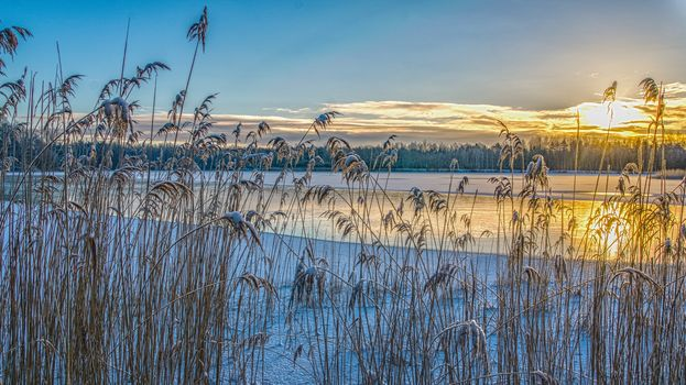 sunset, lake, winter, ice, Plants, landscape