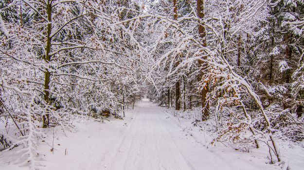 winter, snow, forest, trees, road, landscape