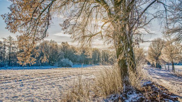 winter, field, trees, road, landscape