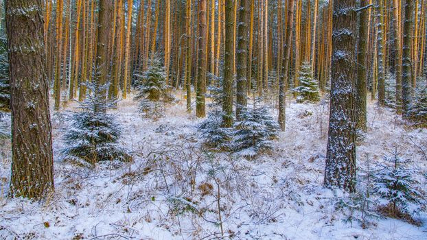 winter, forest, trees, nature