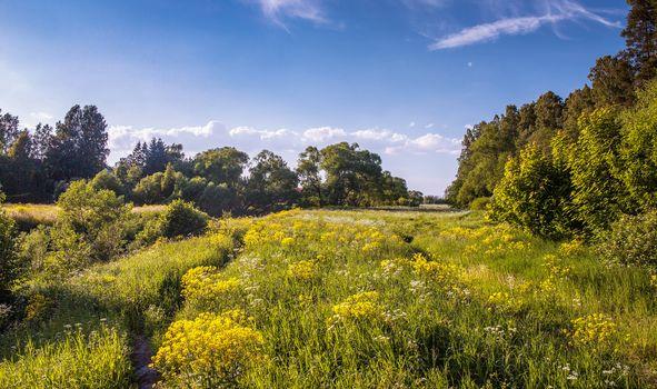 Pavlovsky park, field, flowers, trees, landscape