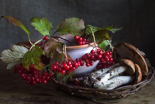autumn, berries, mushrooms, podosynovyk, Kalina