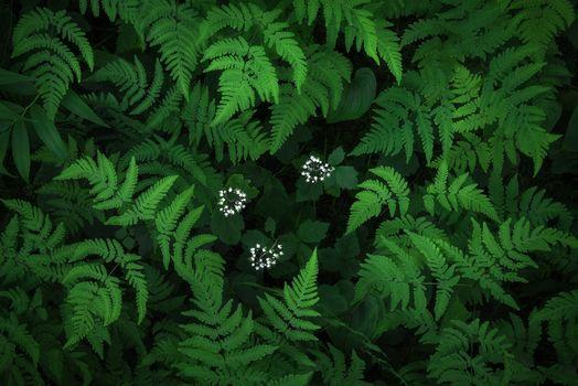 Fern, plant, flora