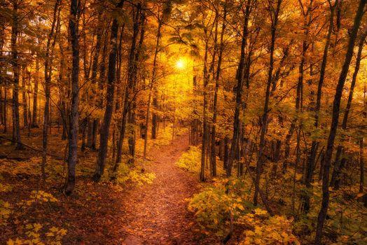 autumn, forest, path, trees, landscape