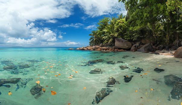 остров Маэ, Сейшельские Острова, море, остров, берег, пальмы, пляж